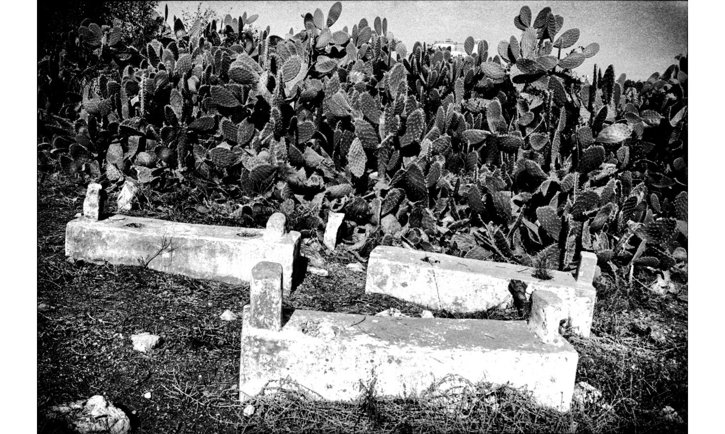 "Cemetery of the Arab village of ""Blad ash Sheikh."" The village was destroyed during the war of independence in 1948. Near Haifa, Israel. November 2004."