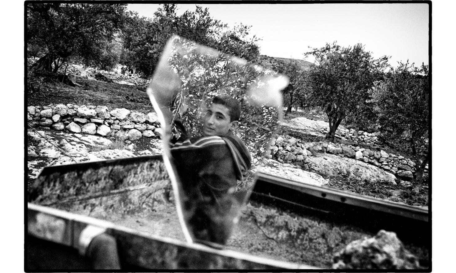 Olive harvest. salem, West Bank. November 2005.