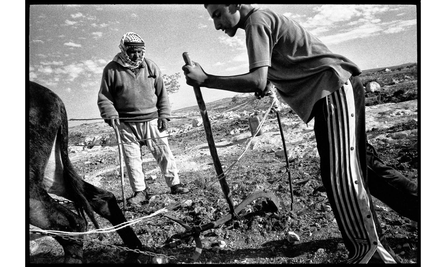 Palestinian villages south of Hebron. Each year, the settlers conquer owned land to peasants. A Palestinian grandfather teaches plowing to his little granson. West Bank, South of Hebron, November 2005.
