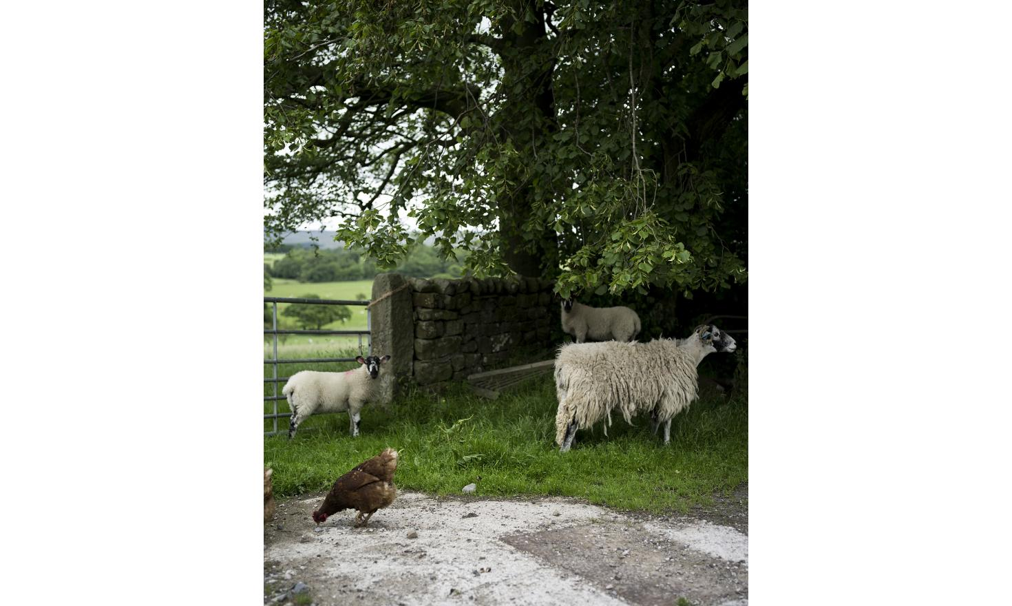 On the sheep-farm of Bryan and Shirley Carter in Lancashire. They both voted to leave the EU in last year's referendum.
