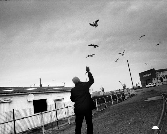 "Un migrant nourrit les oiseaux. ""Afghanis are just like birds: free everywhere"" dit-il."